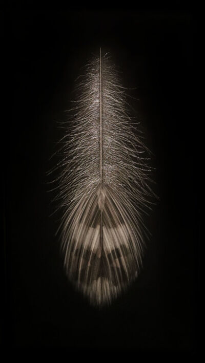 Mitchell Lonas, 'Grouse Feather, Summer', 2018
