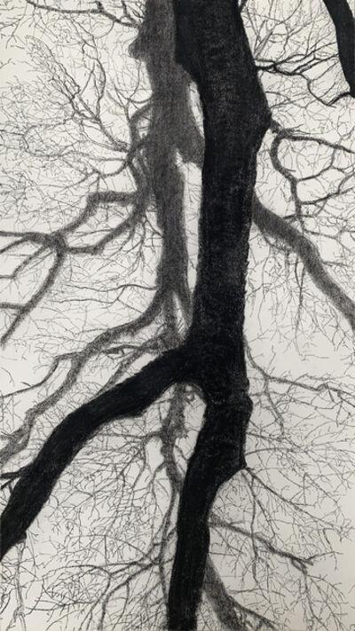 Jeffrey Blondes, '20-12D Bois de Mametz 18h30m00s', 2020