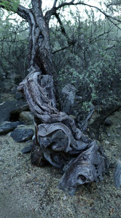 "Richard Rivera, 'Blue Curl Tree, 86"" high', 2019"