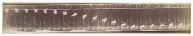 Étienne-Jules Marey, 'Lapin—Évolution de la chute (Rabbit—Evolution of the fall)', 1894