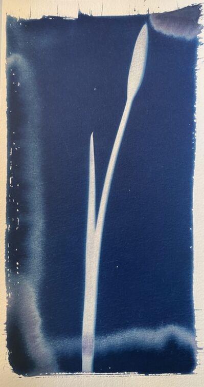 Keris Salmon, 'Iris', 2020