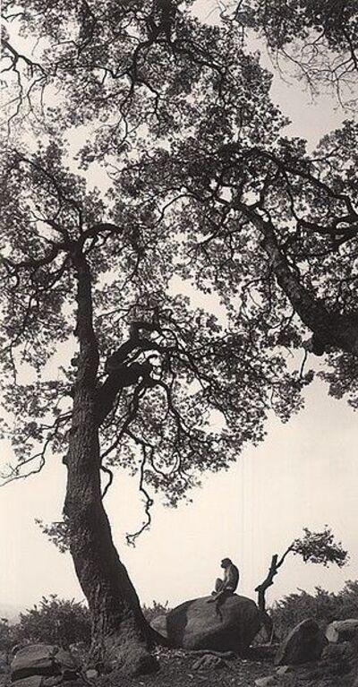 Pentti Sammallahti, 'Untitled, (Monkey On Rock)', 1994