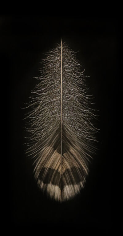 Mitchell Lonas, 'Grouse Feather, Autumn', 2018