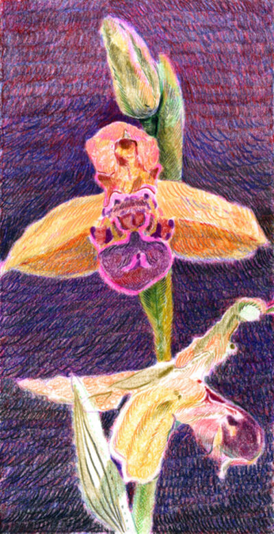Anthony Cudahy, 'Ophrys Apifera', 2020