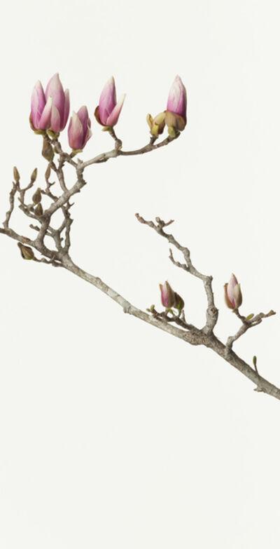 Takashi Tomo-oka, 'Mokuren 4 ( Magnolia )', 2013