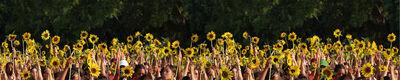 Lidzie Alvisa, 'Untitled- Series Van Gogh Sunflowers', 2005
