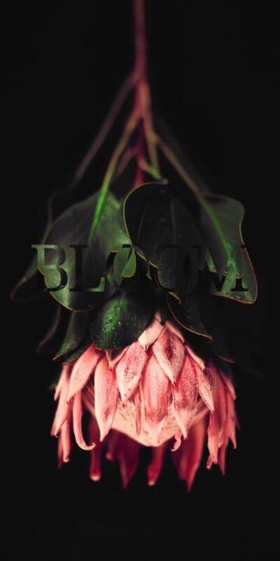 Alina Gozin'a, 'Protea Black'
