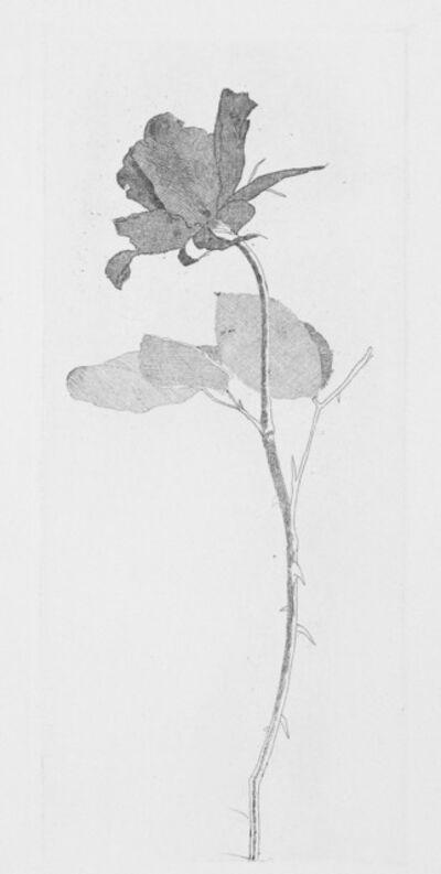 David Hockney, 'The Rose and Rose Stalk', 1969