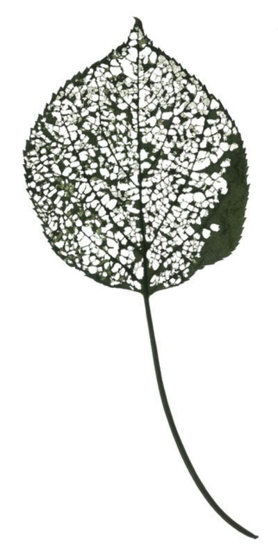 Chad Kleitsch, 'Untitled Leaf - Number 115 (White)', 2018