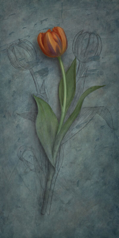 Sean Beavers, 'Tulip Studied', ca. 2014