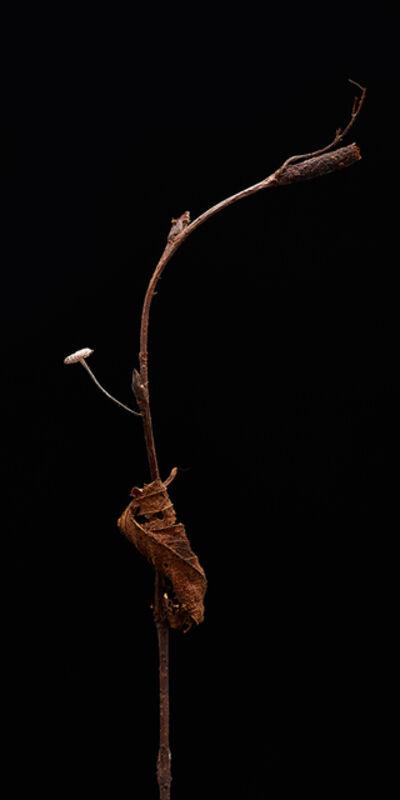 Dan Peterson, 'Stick', 2013