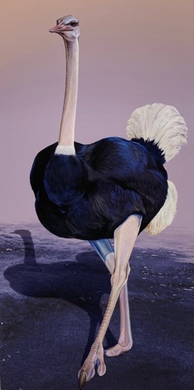 Ink Dwell (Jane Kim), 'Common Ostrich (Struthio camelus)', 2020