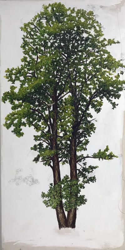Sarah Myers, 'Basswood Tree 2', 2017