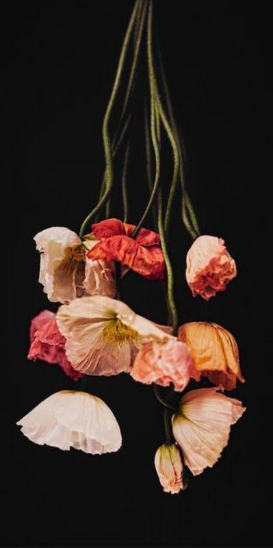Alina Gozin'a, 'Poppies Black'