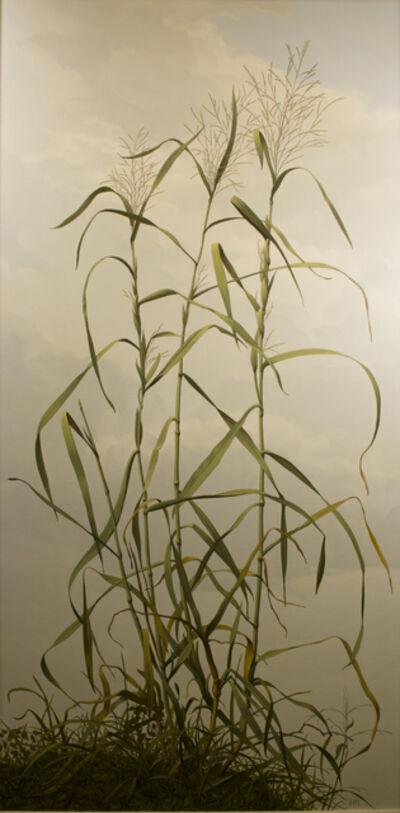 Ward H Nichols, 'Tuft of Weeds'