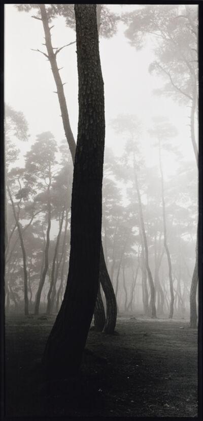 Bae Bien-U, 'Pine Tree', 1991