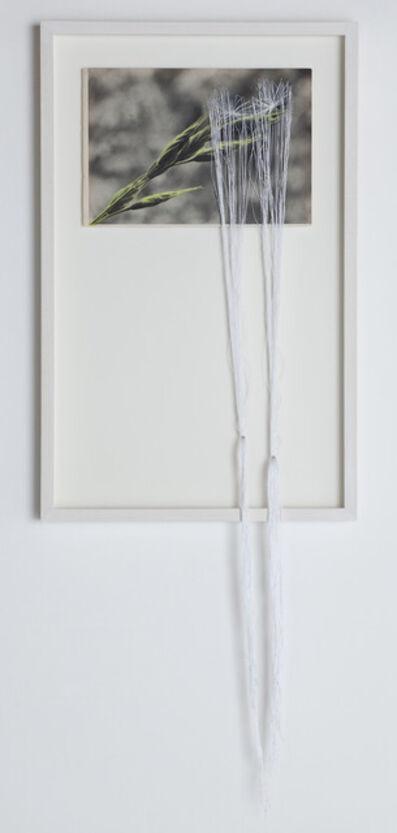 Claudia Losi, 'Dandelion 4', 2013