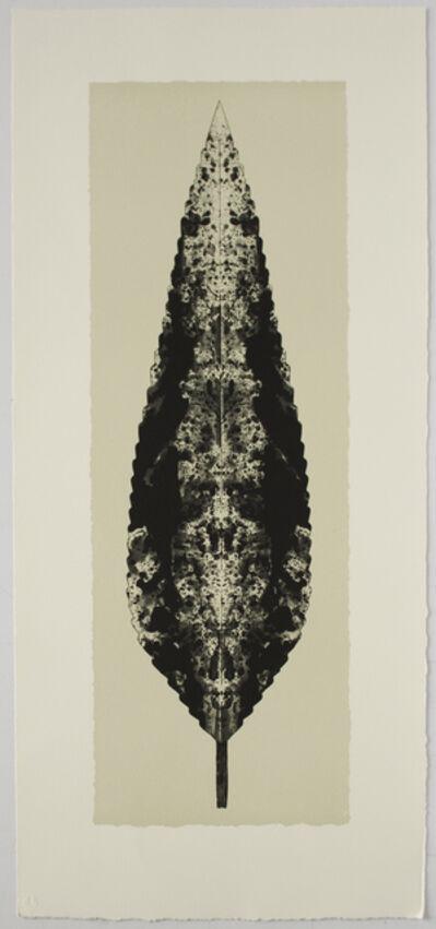 Bruce Conner, 'DARK LEAF', 2001