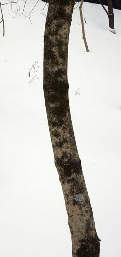Abelardo Morell, 'Bending Tree Trunk', 2015