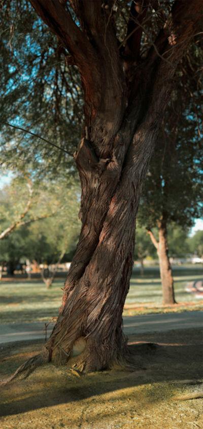 "Richard Rivera, 'Twisty Tree, 95"" high', 2019"