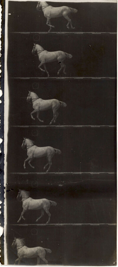 Étienne-Jules Marey, 'Print of Partial Film Strip of a White Horse in Six Frames', 1895-98