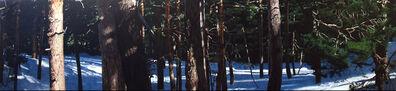 Eloy Morales, 'Bosque con filtraciones solares 2', 2008