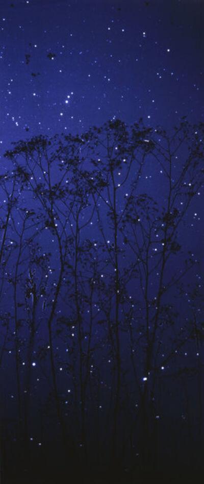 Susan Derges, 'Starfield - Queen Anne's Lace', 2003