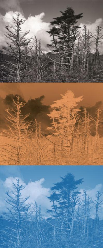 Gesche Würfel, 'Mt. Mitchell, NC (2)', 2020-2021