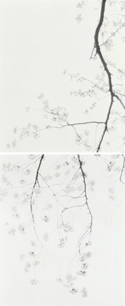 Ori Gersht, 'Hiroshima Sleepless Nights, Never Again 02', 2010
