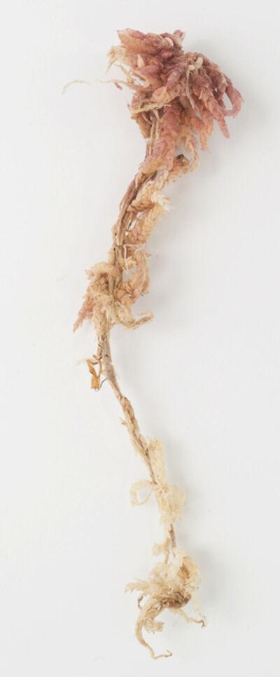 Marion Wilson, 'Hanging Sphagnum', 2015