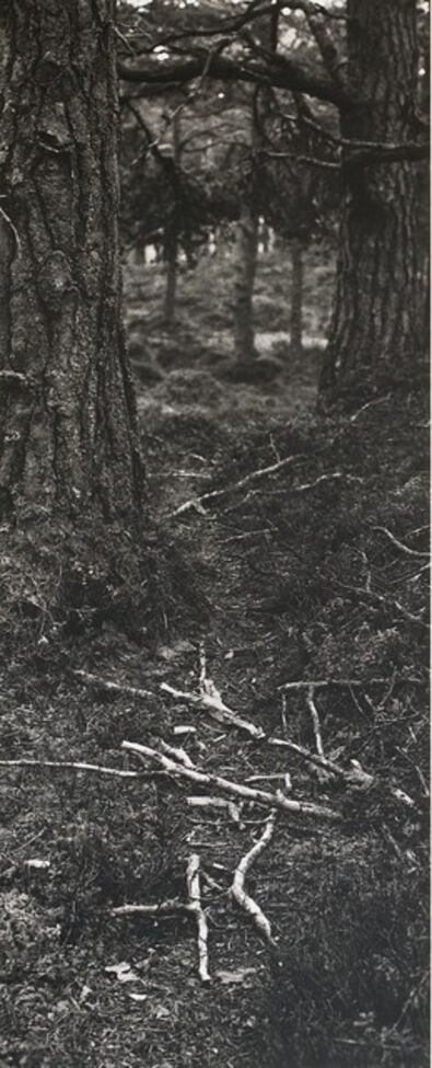 Hamish Fulton, 'Fallen Branches on a deer path', 1985