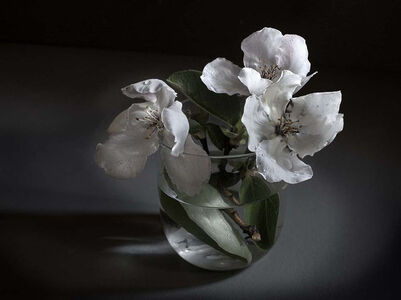 Pilar Pequeño, 'Flowers of quince (Edition 15 copies) '