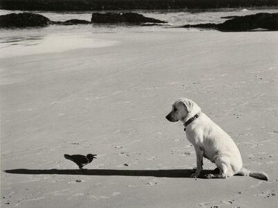 Pentti Sammallahti, 'Western Cape, South Africa (dog and bird) ', ca. 2002