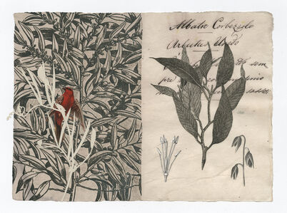 Billy Renkl, 'A Walk In The Woods #3', 2011