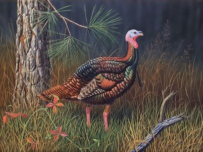 Ron Louque, 'Eastern Wild Turkey', 1976
