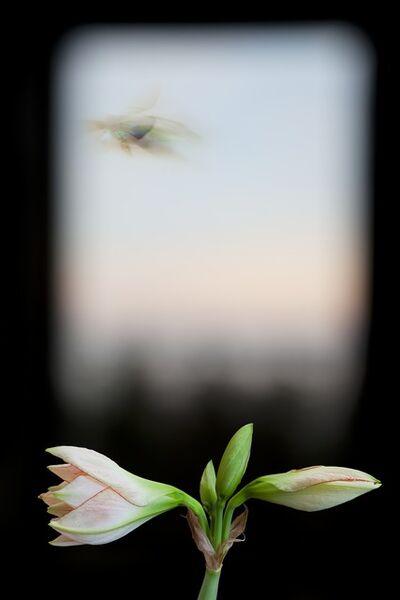 Olivia Parker, 'Evergreen Window', 2012