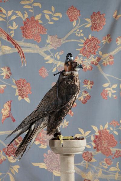 Claire Rosen, 'Saker Falcon No. 4335', 2017