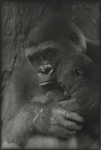 Sylvia Plachy, 'Gorilla Mother and Baby', 2003