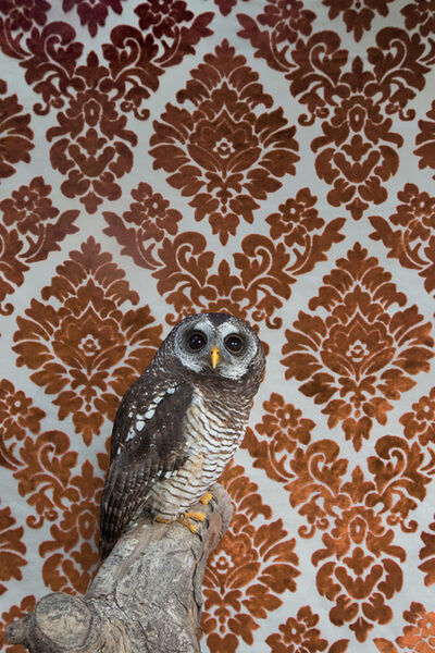Claire Rosen, 'Wood Owl No. 7391', 2017