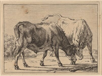 Paulus Potter, 'Two Oxen Fighting', 1650