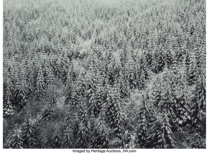 Michael Johnson (b. 1938), 'Swanfall, Vancouver Island and Dune Grass (two photographs)', 1982