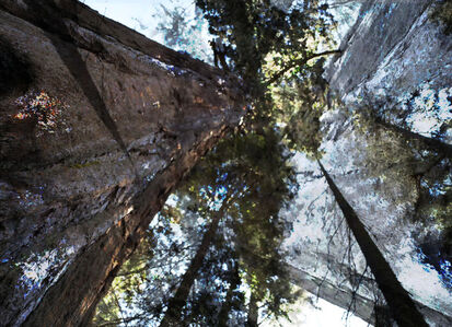 Bill Fontana, 'Sequoia River Echos', 2019