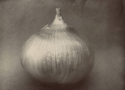 Charles Jones (1866-1959), 'Onion Ailsa Craig, c.1900', c.1900