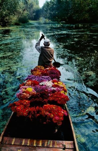 Kashmir Flower Seller 1996 Sundaram Tagore Gallery Steve McCurry
