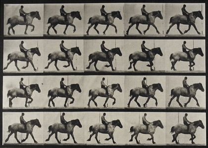 Eadweard Muybridge, 'Plate 597 from Animal Locomotion', 1887