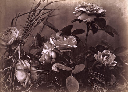 Charles Aubry, 'Roses and Herbs', ca. 1864