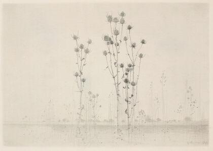 Gunnar Norrman, 'Dipsacus'