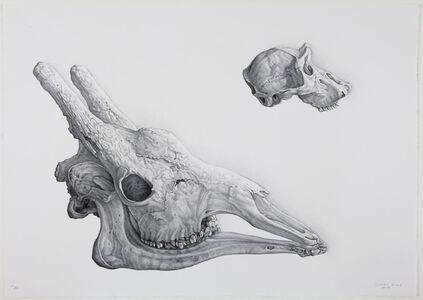 Claudio Bravo, 'Doble Craneo (Double Skulls)', 2007