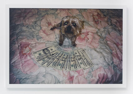 Andrew Jeffrey Wright, 'Little dog on floral comforter', 2004