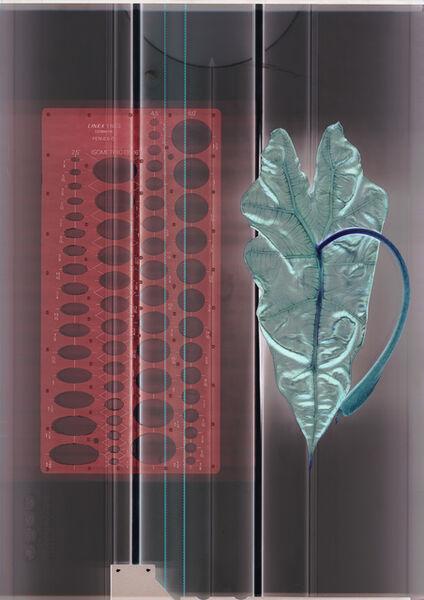 Mathieu Mercier, 'Negative (Rumold/leaf)', 2011